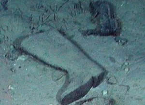 What Does Rms Mean >> Are There Bodies at the Titanic Wreck Site?